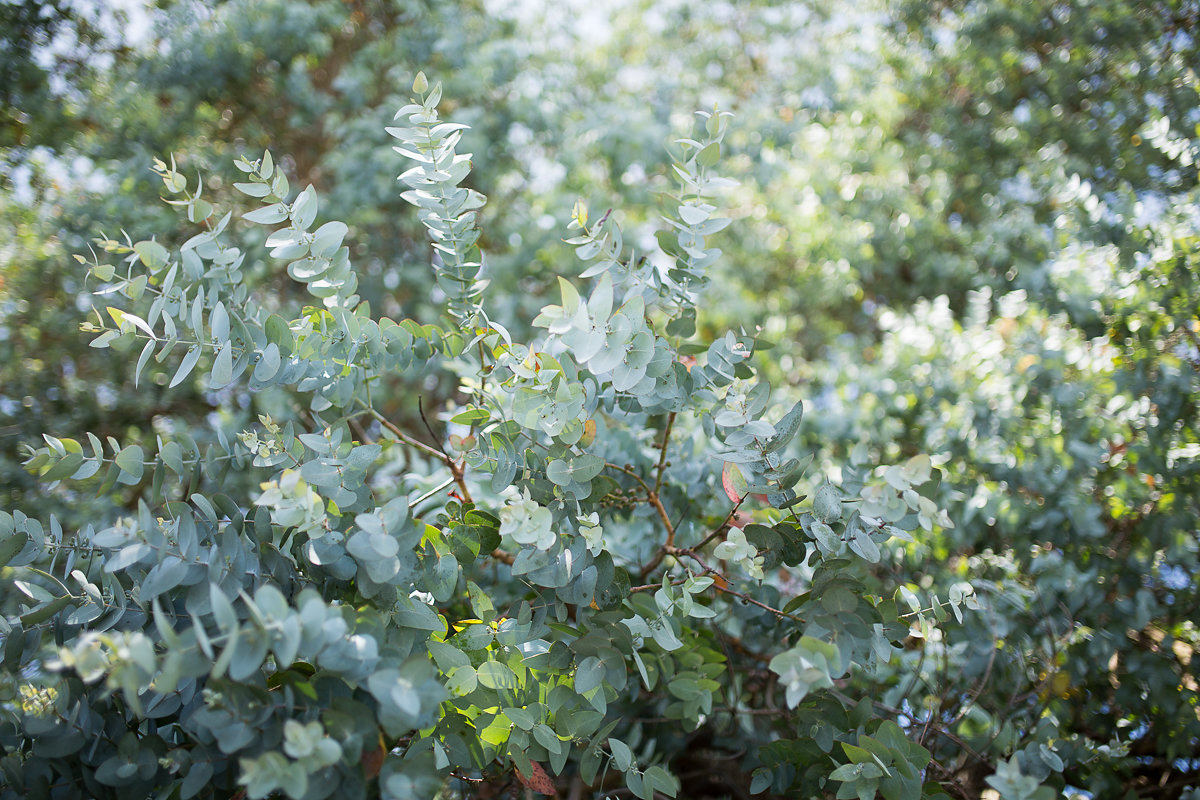 Wild delicious wild bush background image gut health blog