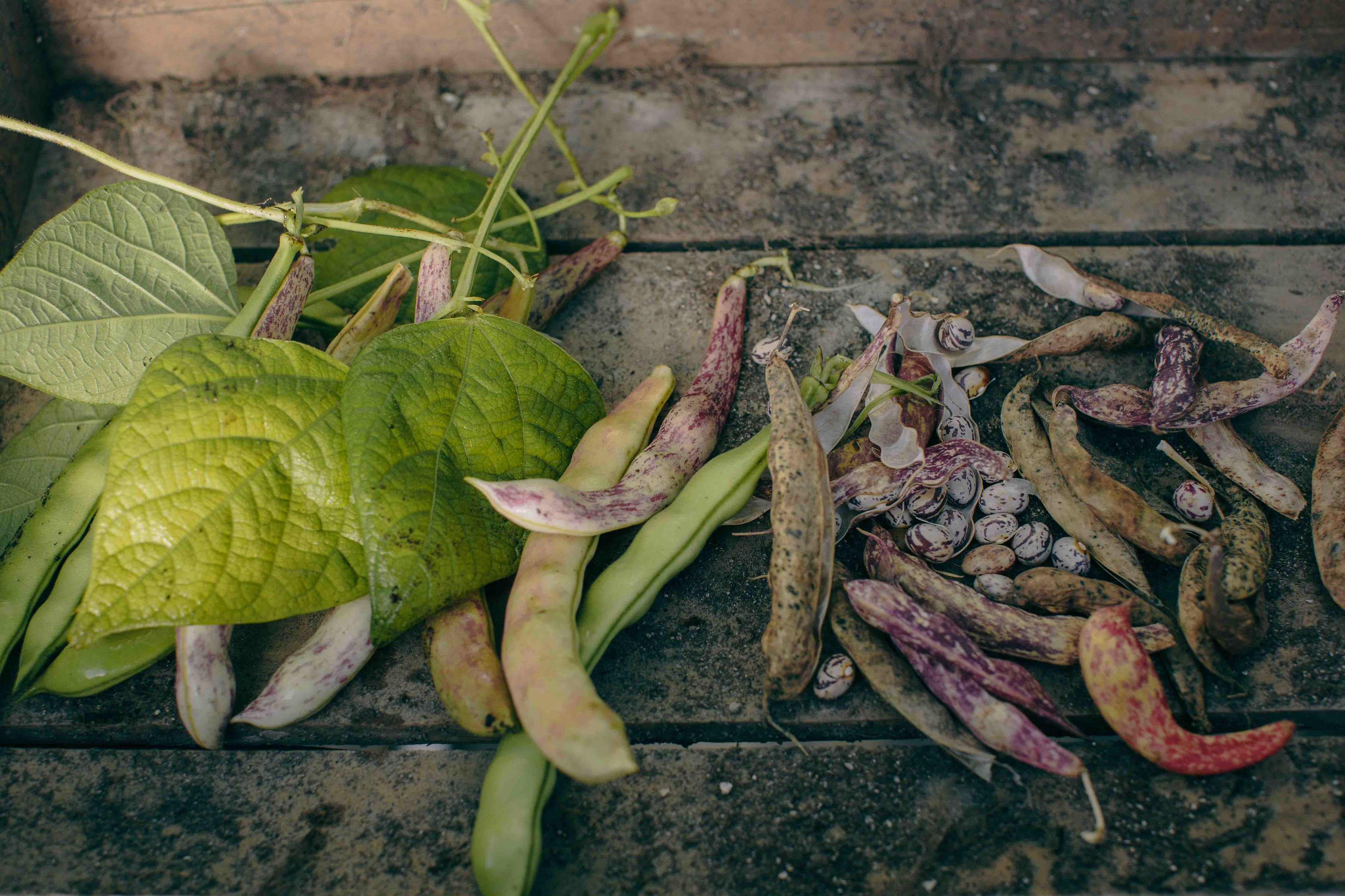 Wild delicious Gallery image foraged beans