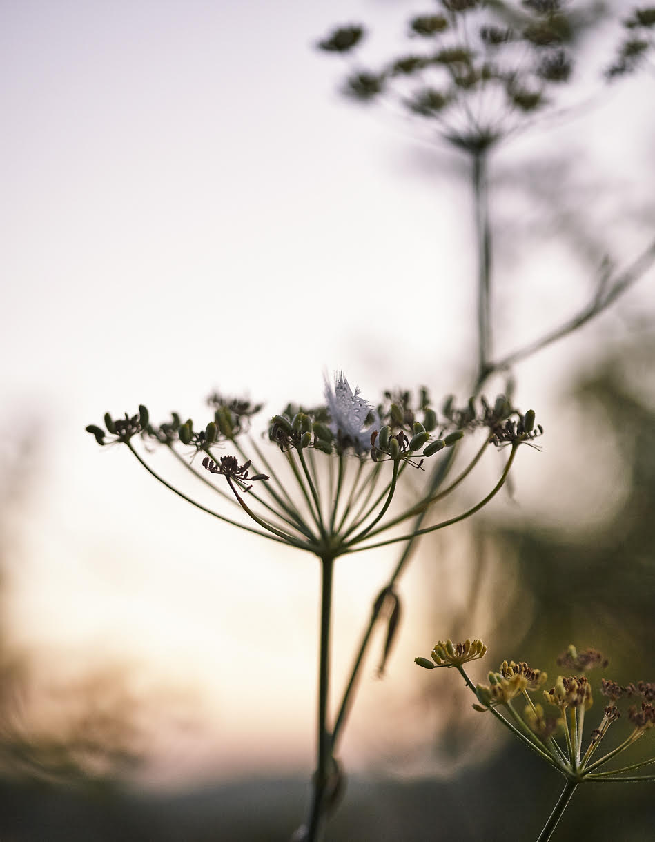 Wild delicious Gallery image of wild flowers at sunset